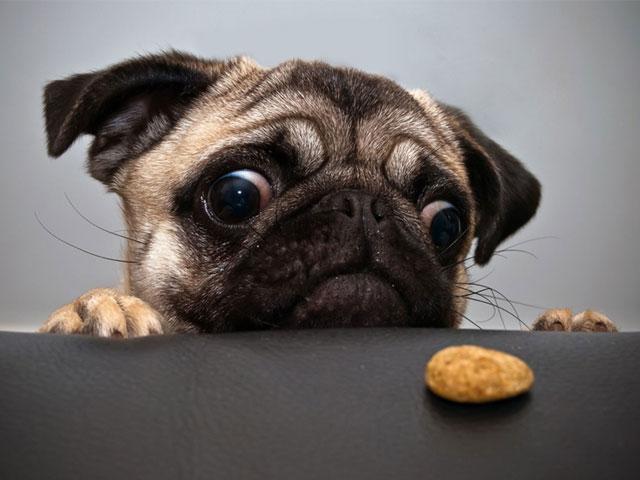 φαγητό τραπέζι Σκύλος