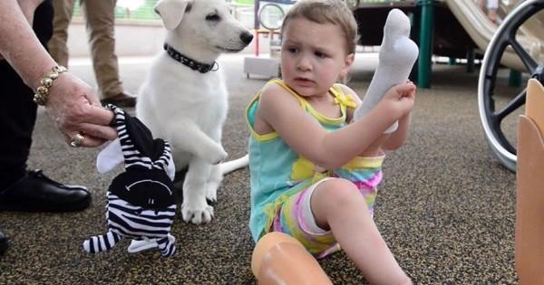 Κουτσό σκυλάκι γίνεται φύλακας κοριτσιού με ακρωτηριασμένα άκρα