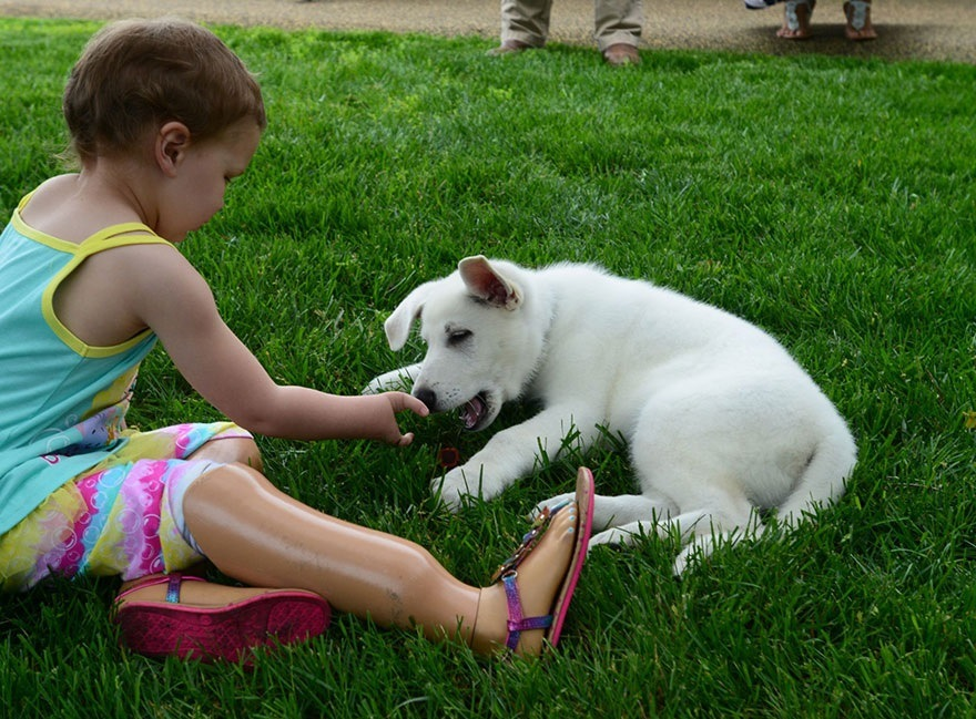 σκυλάκι αναπηρία ακρωτηριασμός