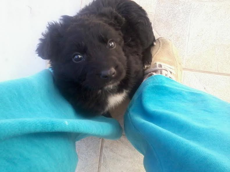 Χαρίζονται Σκύλος κουτάβια κουταβάκια