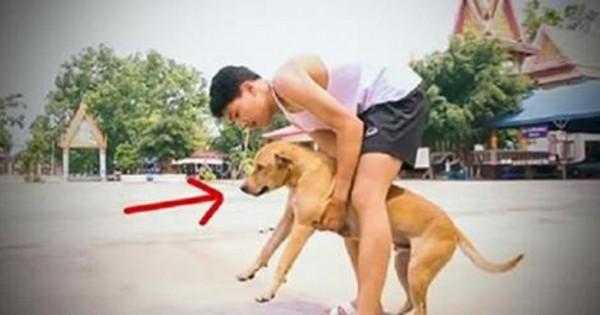 Μάζεψε όλα τα σκυλιά από τους δρόμους και αυτό που έκανε στην συνέχεια ήταν φανταστικό!