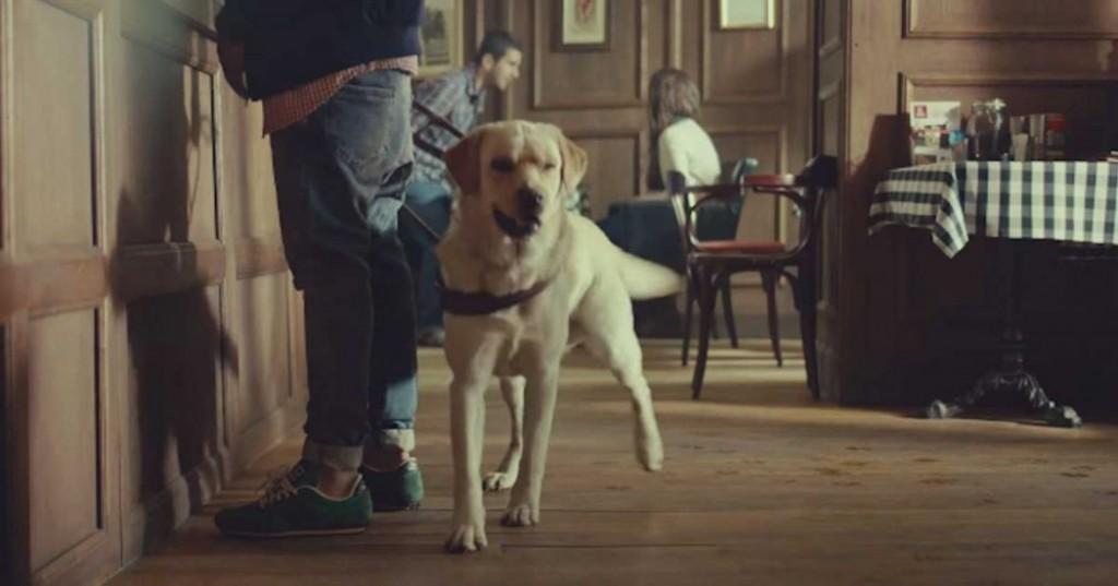 τυφλός σκύλος οδηγός Σκύλος