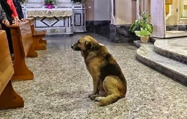 Σκύλος εκκλησία