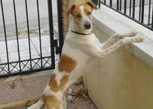 χάθηκε Σκύλος Αττική Άγιος Δημήτριος