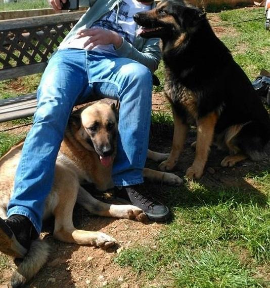 χαρίζονται σκύλοι Χαρίζονται Θεσσαλονίκη