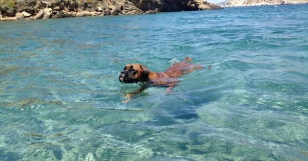 Παραλίες για σκύλους 2015: Δείτε πού επιτρέπεται το κολύμπι για σκύλους!