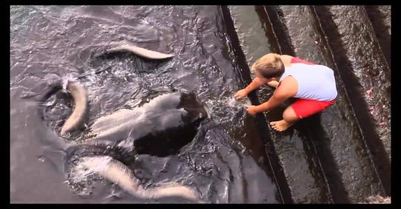 Αυτό το παιδί παίζει με έναν πολύ ασυνήθιστο φίλο στην θάλασσα….!!! (Βίντεο)