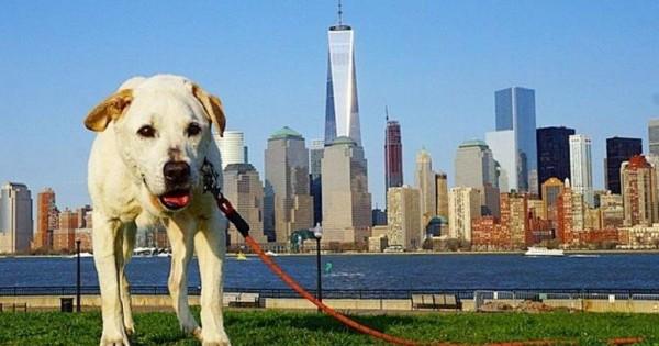 «Το τελευταίο ταξίδι με τον σκύλο μου που πεθαίνει» (pics)