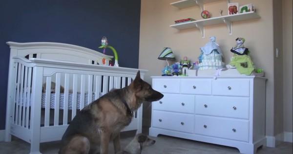 Έφτιαξε ένα βίντεο ημερόλογιο για την εγκυμοσύνη της γυναίκας του. Δεν περίμενε όμως ότι θα συνέβαινε αυτό. (Βίντεο)