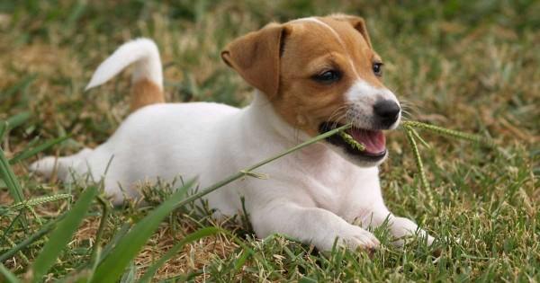 Τα 30 φυτά του κήπου που μπορεί να σκοτώσουν το σκύλο ή τη γάτα σας
