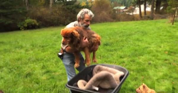 Αυτός ο άντρας έκανε κάτι το απίστευτο για έναν σκύλο που ήταν αλυσοδεμένος για 14 χρόνια… (Βίντεο)