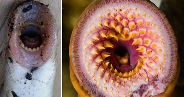 «Ψάρια- βαμπίρ» πέφτουν από τον… ουρανό στην Αλάσκα (Εικόνες)