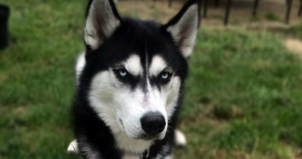 Έτσι είναι ένας…τσαντισμένος σκύλος (Εικόνες)