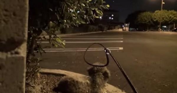 Μια άγνωστη πλησιάζει αυτό το αδέσποτο σκυλάκι. Την ώρα όμως που του περνάει το κολάρο… (Βίντεο)