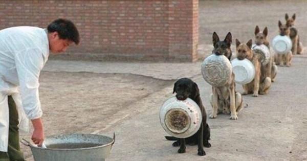 Σκυλιά της αστυνομίας στην ουρά για το συσσίτιο (Εικόνες)