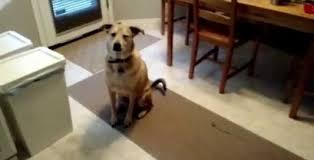 Ο σκύλος δεν μπορεί να κρύψει τον ενθουσιασμό του (Βίντεο)