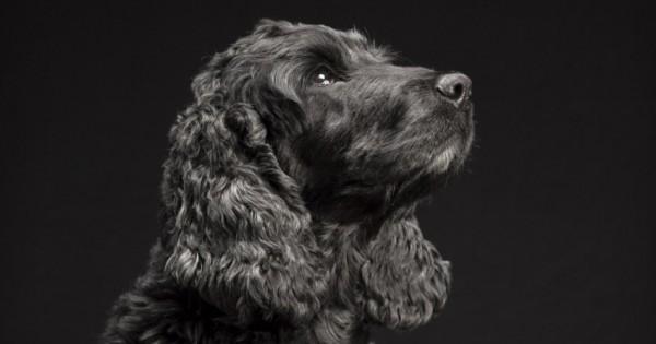 Το «Black Dogs Project» βοηθά τους μαύρους σκύλους να βρουν σπίτι (Εικόνες)