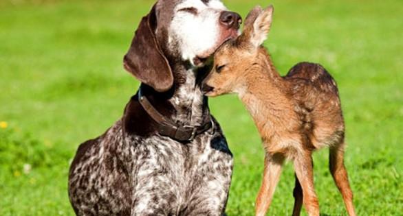 Τα ζώα κάνουν φίλους όπως και οι άνθρωποι (pics+video)