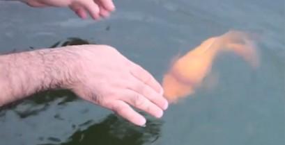 Ένα έξυπνο ψάρι που φέρνει αντικείμενα σαν σκύλος (Βίντεο)