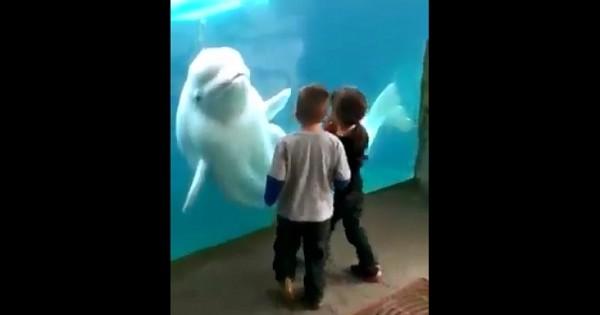 Μια φάλαινα που της αρέσει να τρομάζει τα μικρά παιδιά (Βίντεο)