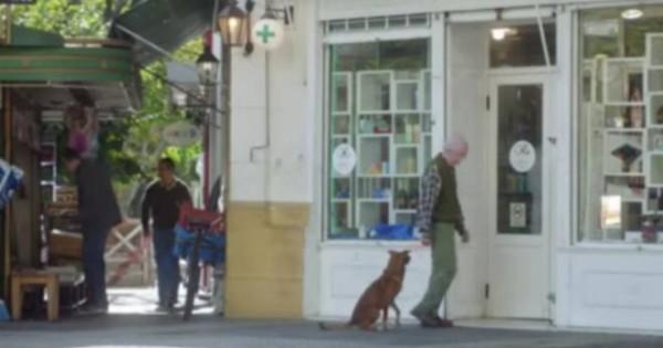 ΑΠΛΑ ΣΥΓΚΛΟΝΙΣΤΙΚΟ: Ο πιστός σκύλος, η δωρέα οργάνων και η διαφήμιση της χρονιάς που ραγίζει καρδιές! (video)