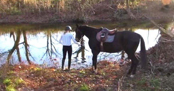 Το άλογο της φοβάται να μπει στο νερό. Δείτε όμως τι έγινε όταν βούτηξε μέσα τα πόδια του! (Βίντεο)