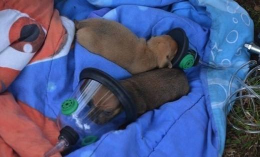 Πυροσβέστες έσωσαν με μάσκες οξυγόνου κουτάβια που εγκλωβίστηκαν σε φωτιά (Εικόνες)