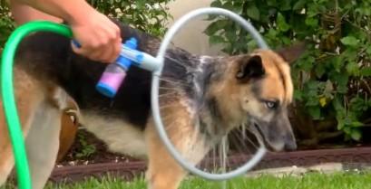 Πλυντήριο σκύλων Woof Washer 360 (Βίντεο)