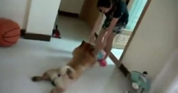 Tεμπέλικος σκύλος «κάνει το ψόφιο» για να αποφύγει το μπάνιο! (Βίντεο)