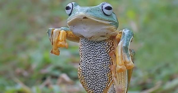 Ο βάτραχος… Karate Kid (Εικόνες)