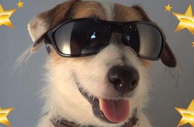Jesse, ο νοικοκύρης σκύλος!