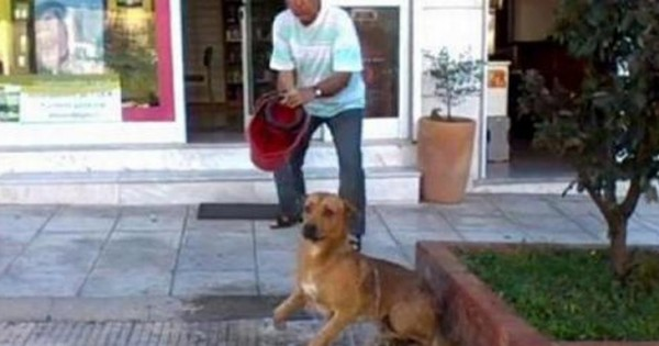 Θεσσαλονίκη: Εισαγγελική εντολή για το «μπουγέλο» με χλωρίνη σε σκύλο