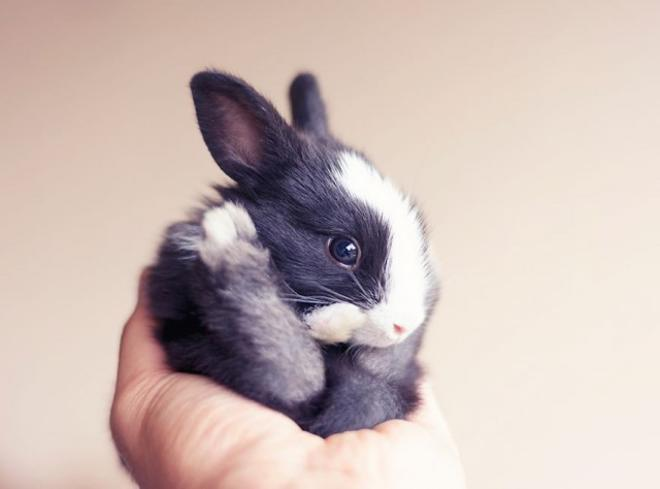 νεογέννητο μωρό κουνέλι