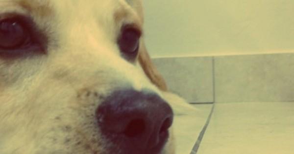 Ο σκύλος την κάνει με ελαφρά (Βίντεο)