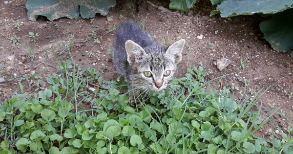 Χαρίζεται πανέμορφο γατάκι!