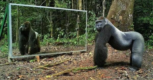 Τι γίνεται αν βάλεις έναν καθρέφτη μέσα στη ζούγκλα; (video)