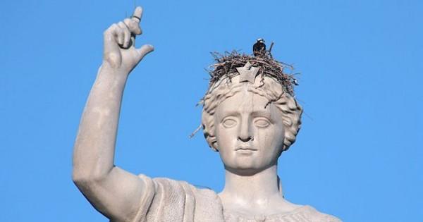 Τα πιο ασυνήθιστα μέρη που μπορεί να δημιουργηθεί μια φωλιά πουλιών