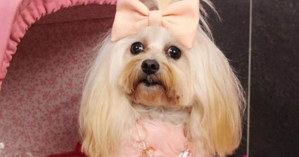 Είναι το σκυλάκι σας κακομαθημένο;
