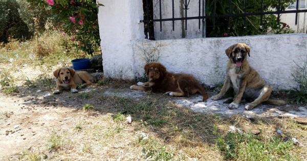 Βρέθηκαν κουταβάκια στη Θεσσαλονίκη!