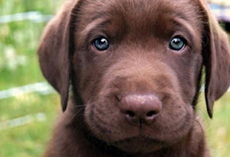 Τι λένε τα μάτια του σκύλου σας για την υγεία του;