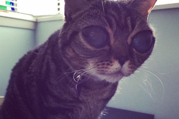 Matilda-the-cat-diagnosed-with-feline-leukemia-that-give-her-eyes-a-wide-glassy-appearance
