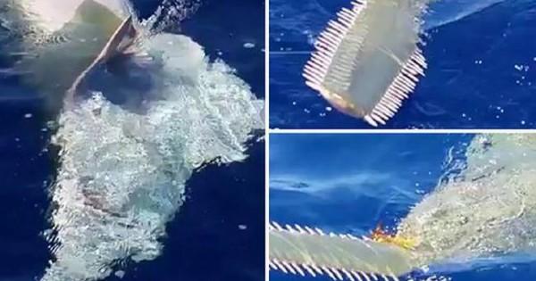 Δείτε το γιγάντιο θαλάσσιο «τέρας» με… πριόνι που εμφανίστηκε στη Φλόριντα! (video)