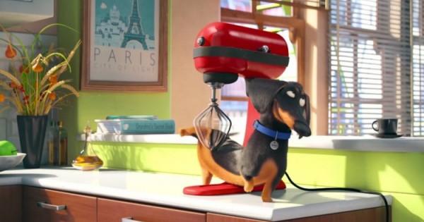 The Secret Life Of Pets: Τι κάνουν οι πιστοί μας φίλοι όταν λείπουμε από το σπίτι (βιντεο)