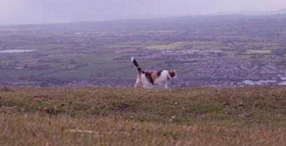 Πεζοπορία στην εξοχή με μια τυφλή γάτα (Βίντεο)