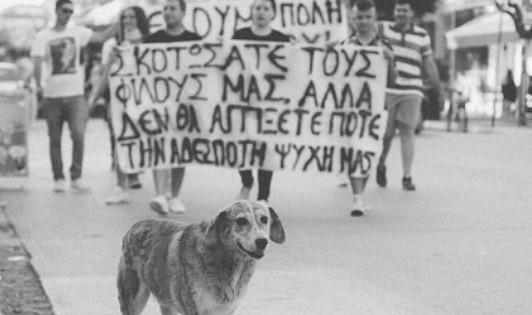 """Η Πτολεμαΐδα έστειλε το μήνυμα: """"Καμία ανοχή στην εξόντωση των ζώων"""""""