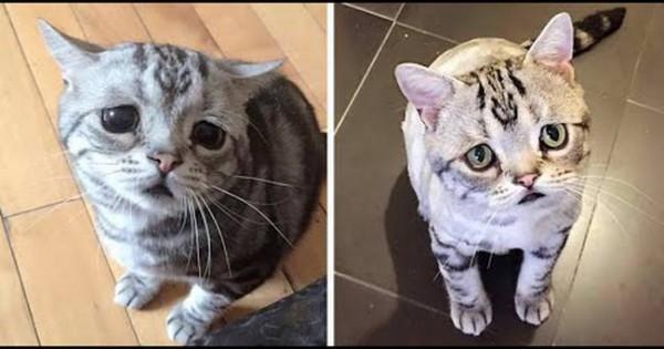 Αυτή είναι η Luhu και είναι η πιο λυπημένη γάτα στον κόσμο (video)