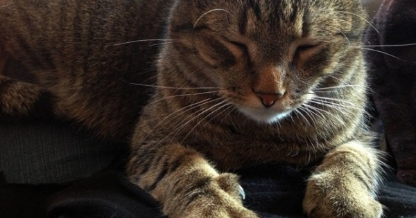 Γιατί οι γάτες μας «ζυμώνουν»;;