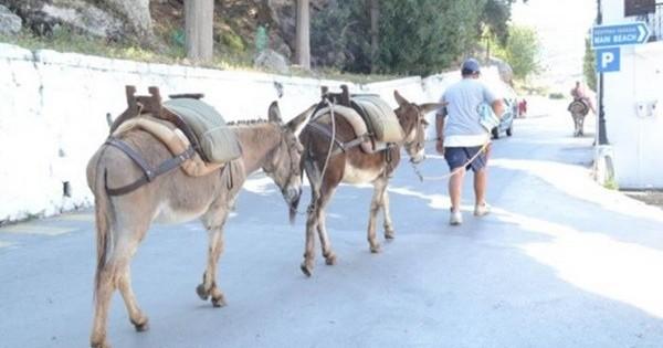 Λέρος: Άλογα και γαϊδουράκια με… αριθμό κυκλοφορίας!