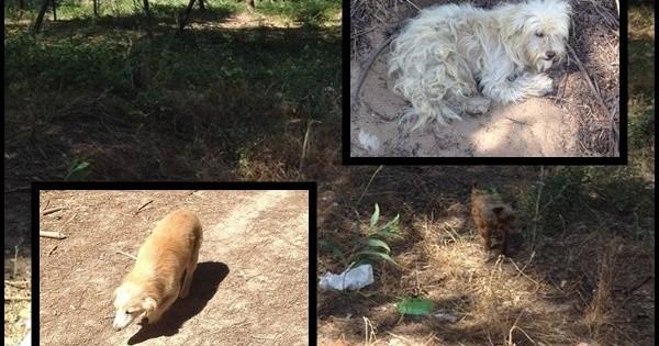 SOS: Μαζική εγκατάλειψη 70 σκύλων στο δάσος!