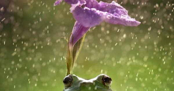 Όταν τα ζώα χρησιμοποιούν «ομπρέλα»! (εικόνες)